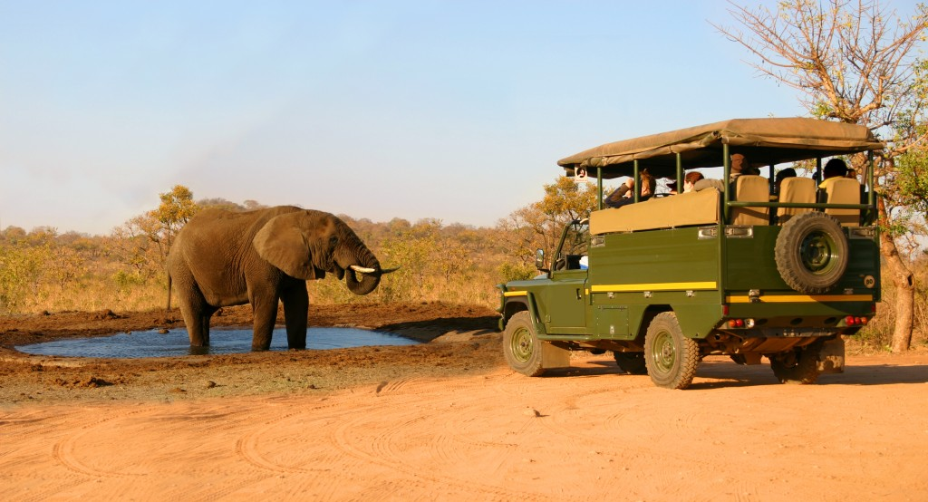 Elephant, Safari Truck