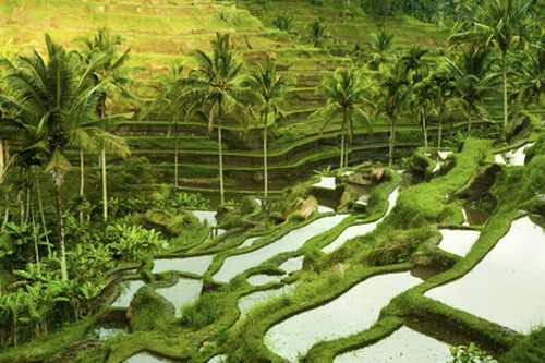 Rice terrace in the morning